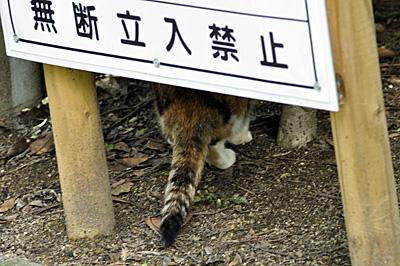 不法侵入の猫
